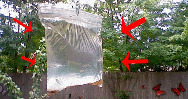 Människor hänger plastpåsar i taket. Anledningen? Det här är genialt!